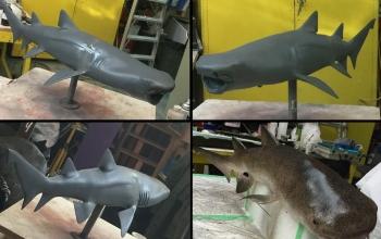 Shark-min